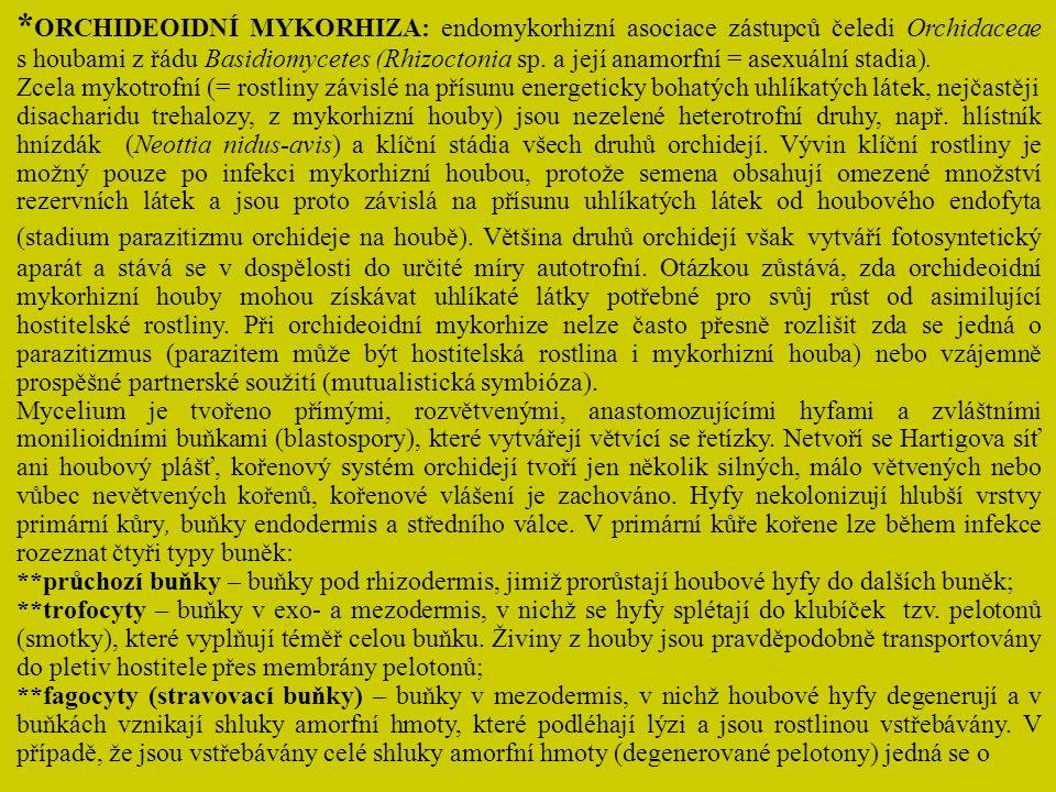 *ORCHIDEOIDNÍ MYKORHIZA: endomykorhizní asociace zástupců čeledi Orchidaceae s houbami z řádu Basidiomycetes (Rhizoctonia sp. a její anamorfní = asexuální stadia).
