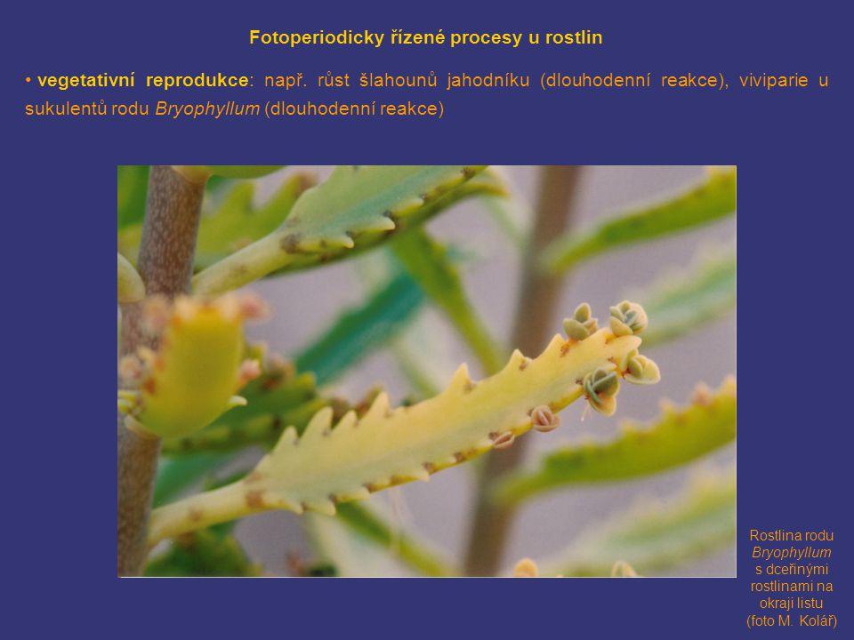 Fotoperiodicky řízené procesy u rostlin