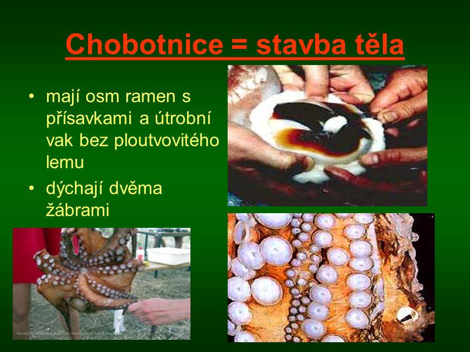 Chobotnice = stavba těla