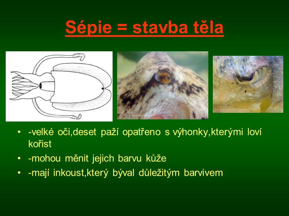 Sépie = stavba těla -velké oči,deset paží opatřeno s výhonky,kterými loví kořist. -mohou měnit jejich barvu kůže.