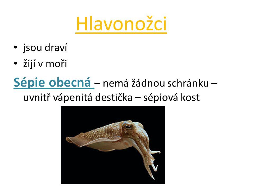 Hlavonožci jsou draví. žijí v moři.
