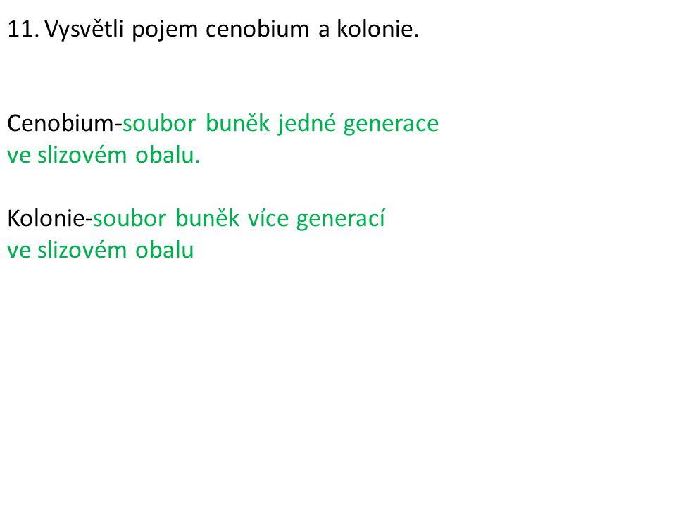 11. Vysvětli pojem cenobium a kolonie.