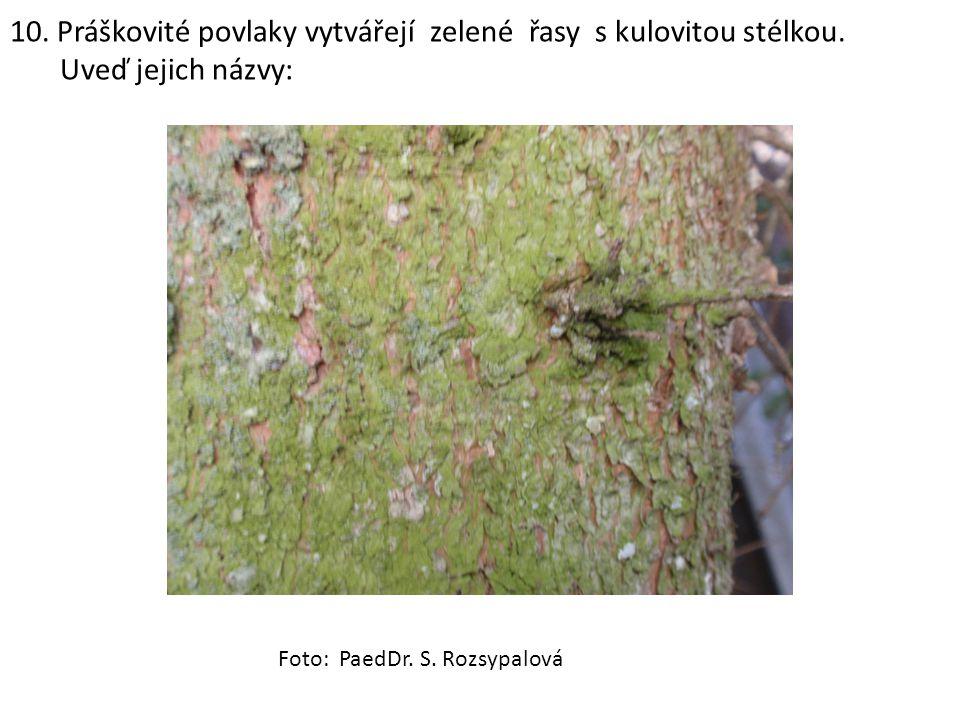 10. Práškovité povlaky vytvářejí zelené řasy s kulovitou stélkou.