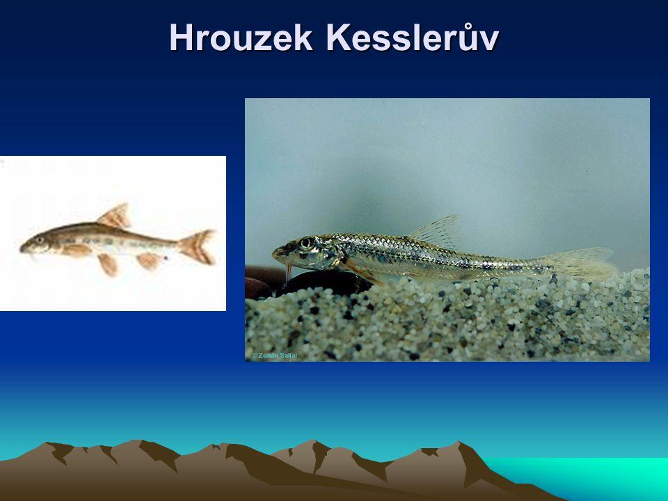 Hrouzek Kesslerův