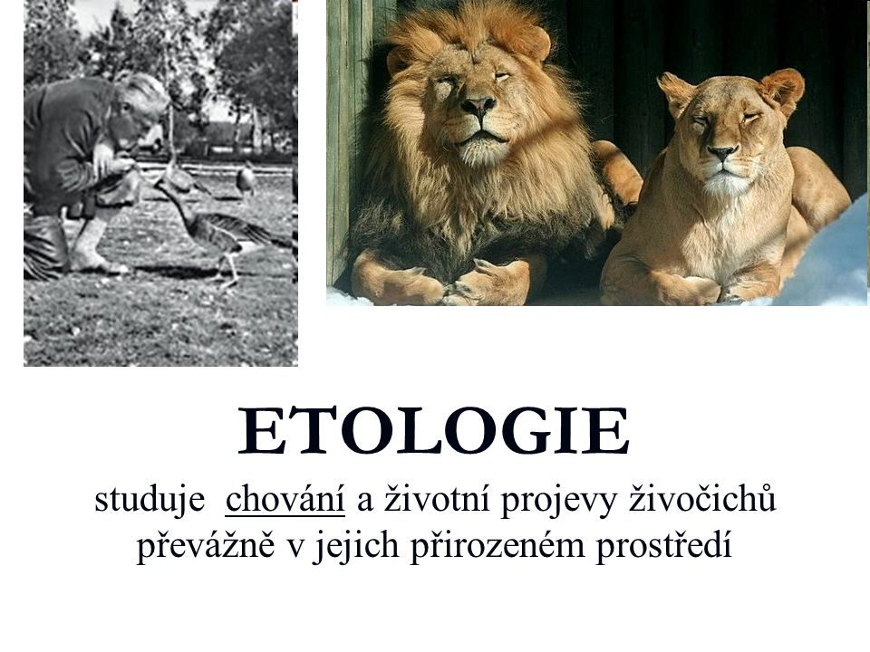 ETOLOGIE studuje chování a životní projevy živočichů převážně v jejich přirozeném prostředí