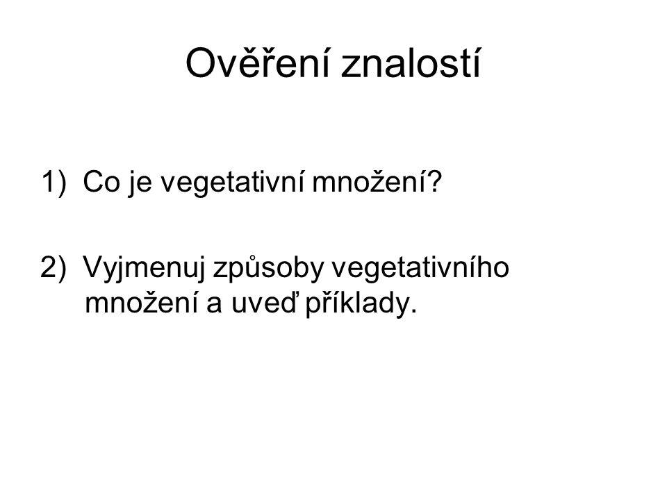 Ověření znalostí 1) Co je vegetativní množení