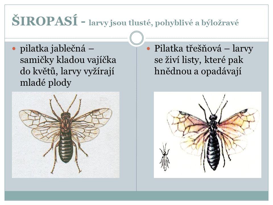 ŠIROPASÍ - larvy jsou tlusté, pohyblivé a býložravé