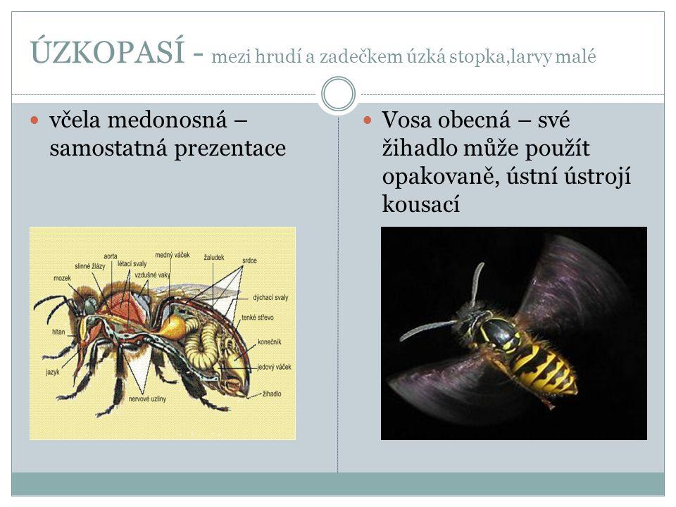 ÚZKOPASÍ - mezi hrudí a zadečkem úzká stopka,larvy malé