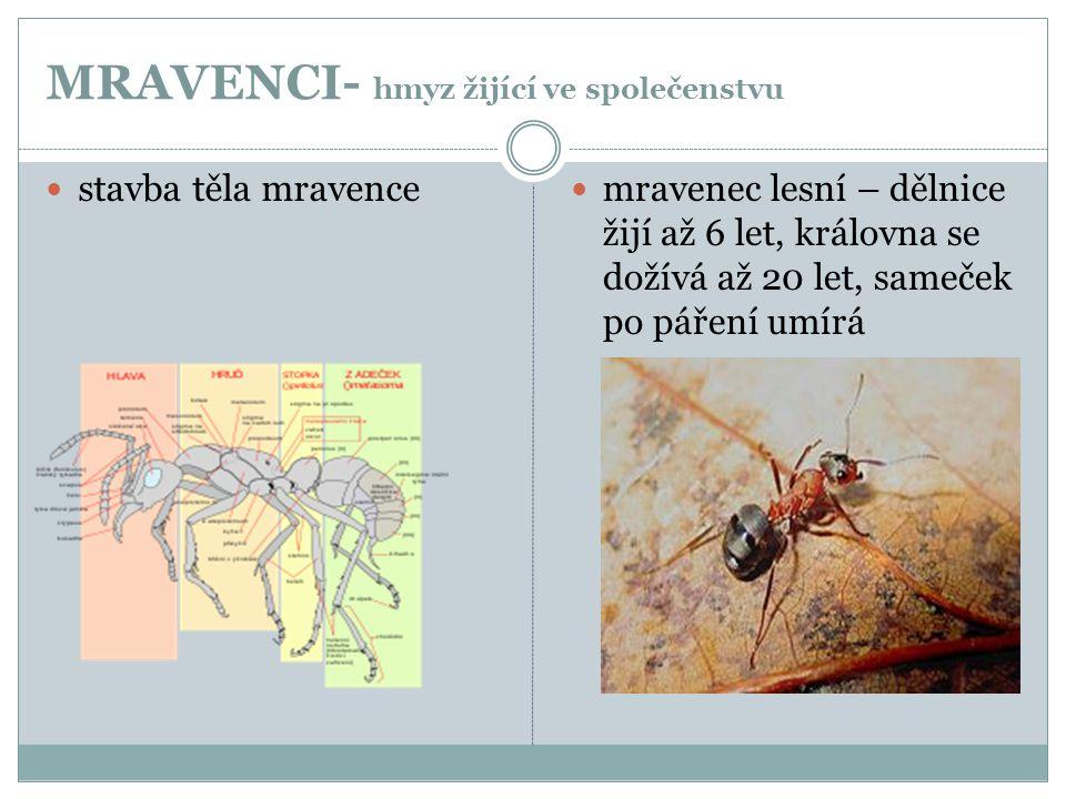 MRAVENCI- hmyz žijící ve společenstvu
