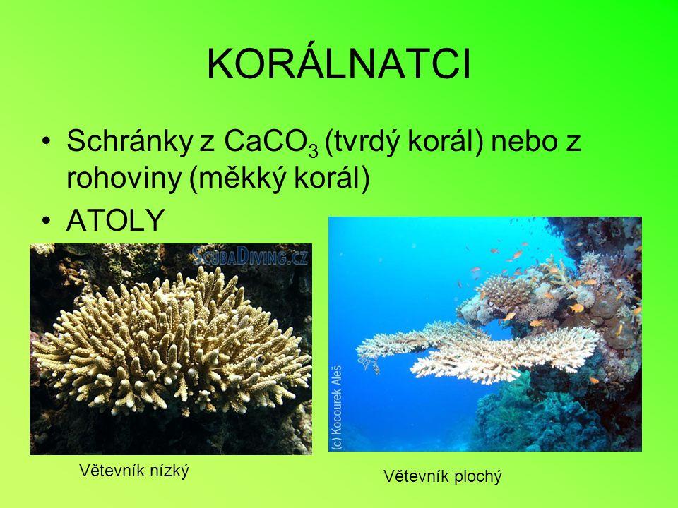 KORÁLNATCI Schránky z CaCO3 (tvrdý korál) nebo z rohoviny (měkký korál) ATOLY.