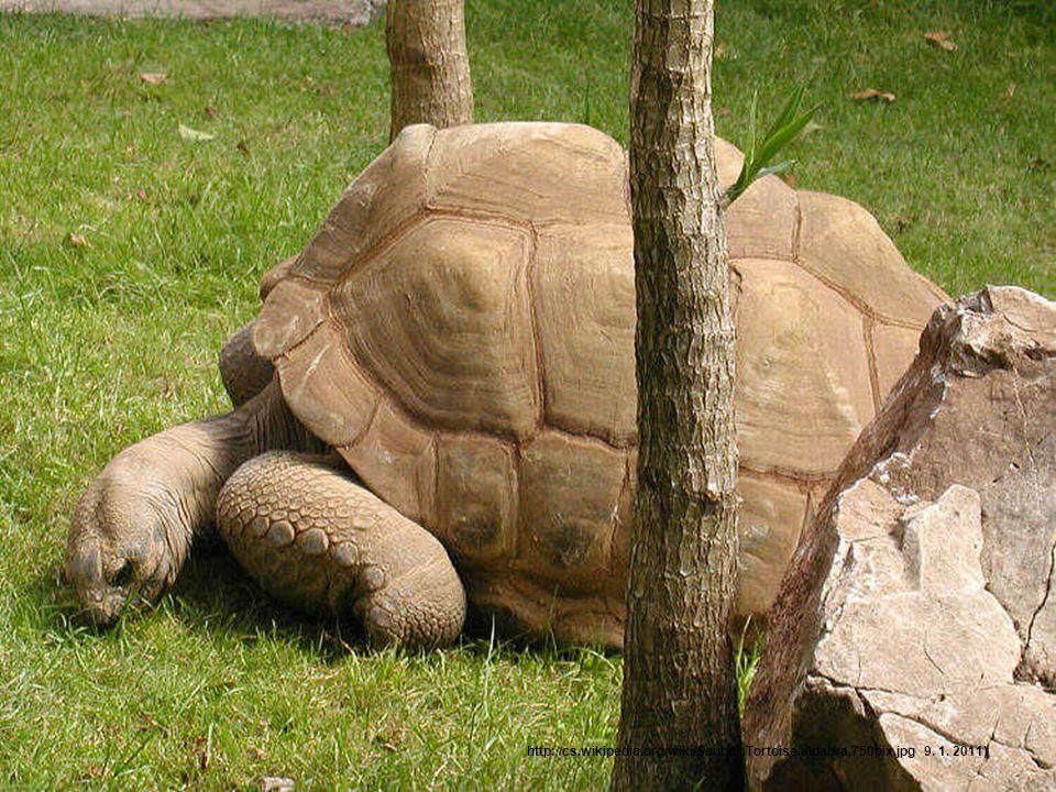 Nejpomalejší želva Při testu s želvou Gopherus agassizii byla naměřena rychlost 0,22-0,48 km/h. Podobné testy byly prováděny s želvou obrovskou.