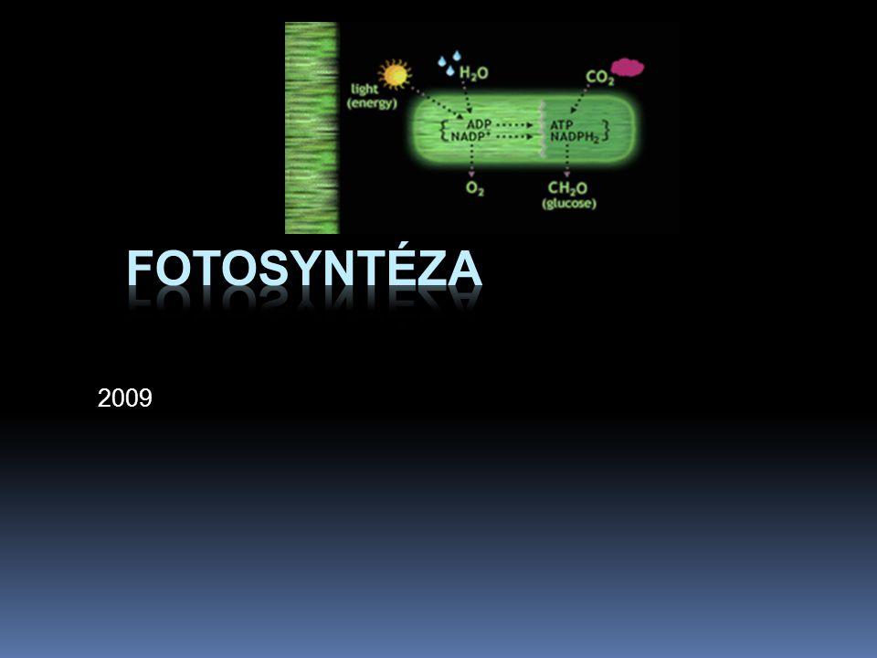 Fotosyntéza 2009