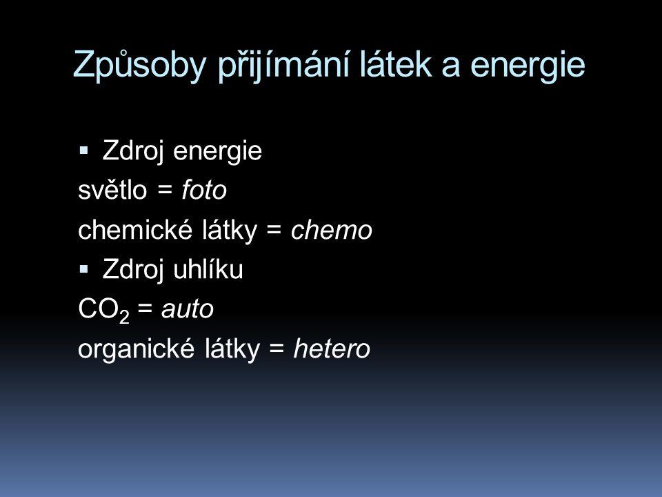 Způsoby přijímání látek a energie