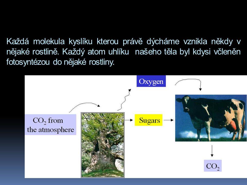 Každá molekula kyslíku kterou právě dýcháme vznikla někdy v nějaké rostlině.