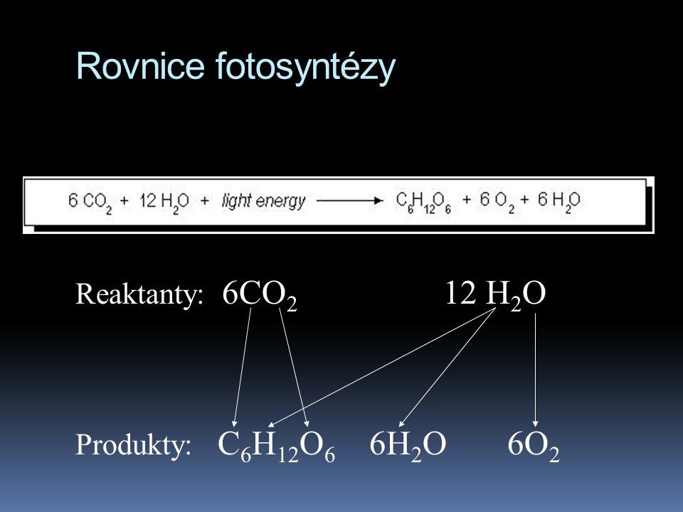 Rovnice fotosyntézy Reaktanty: 6CO2 12 H2O Produkty: C6H12O6 6H2O 6O2