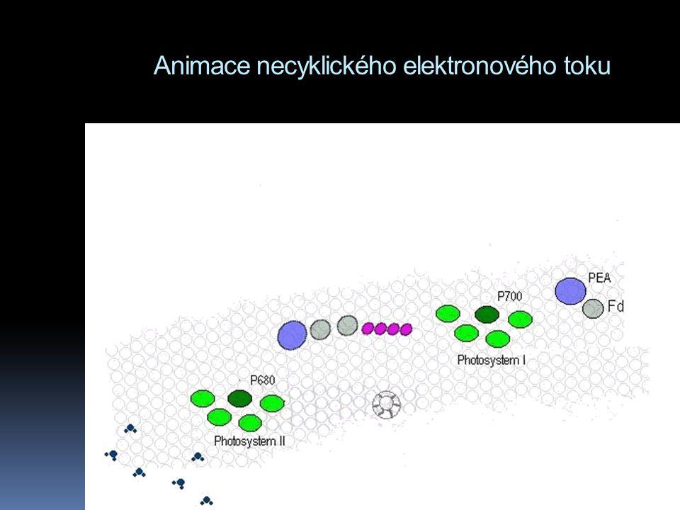 Animace necyklického elektronového toku