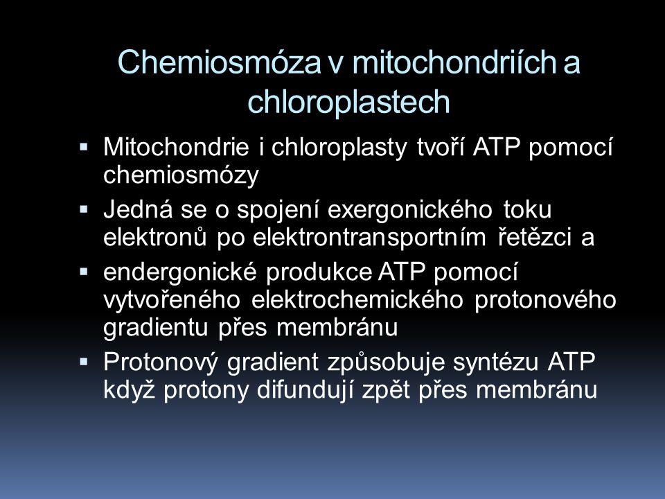 Chemiosmóza v mitochondriích a chloroplastech