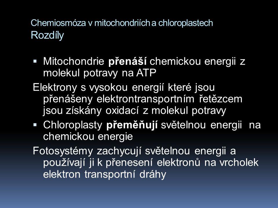 Chemiosmóza v mitochondriích a chloroplastech Rozdíly