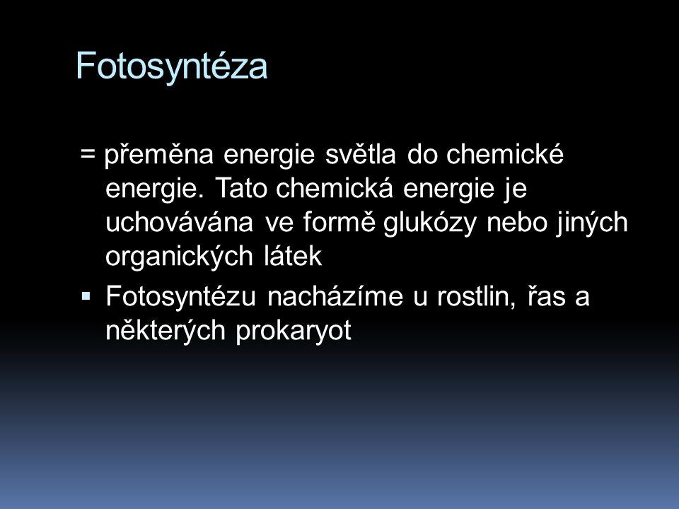 Fotosyntéza = přeměna energie světla do chemické energie. Tato chemická energie je uchovávána ve formě glukózy nebo jiných organických látek.