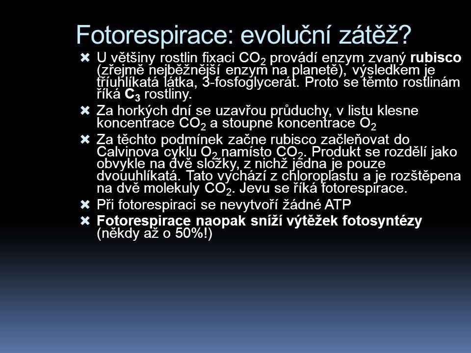 Fotorespirace: evoluční zátěž