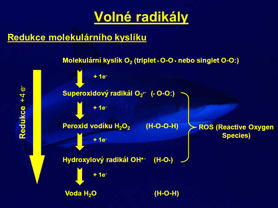 Volné radikály Redukce molekulárního kyslíku Redukce +4 e-