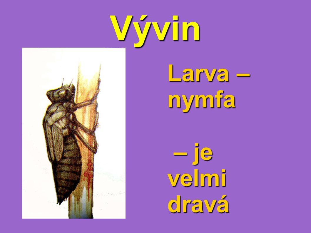Vývin Larva – nymfa – je velmi dravá