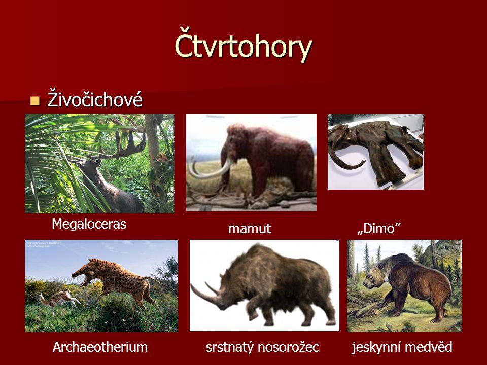 """Čtvrtohory Živočichové Megaloceras mamut """"Dimo Archaeotherium"""