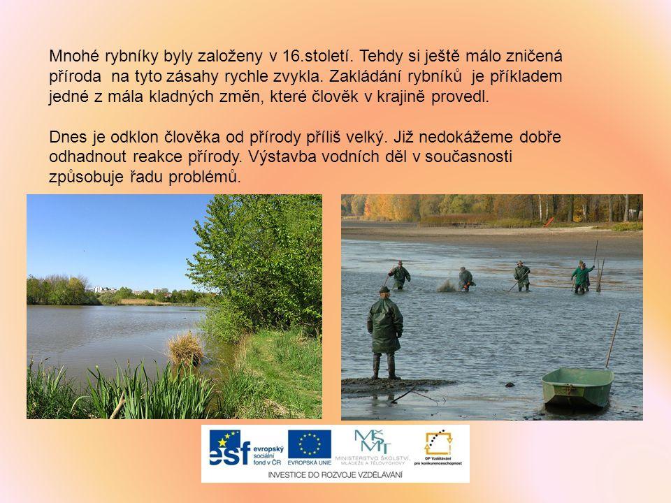 Mnohé rybníky byly založeny v 16. století