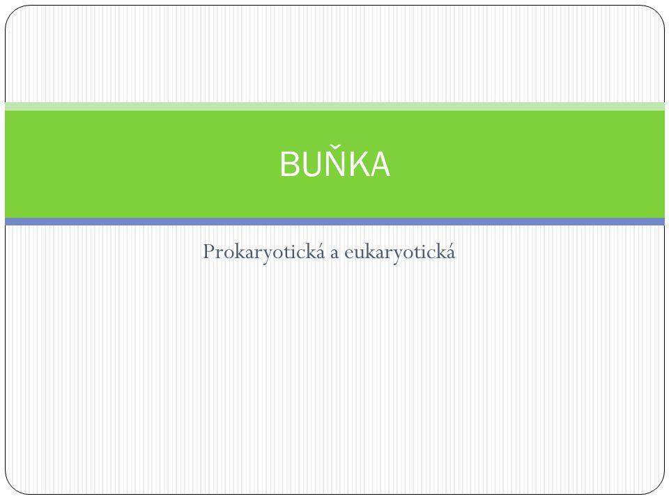 Prokaryotická a eukaryotická