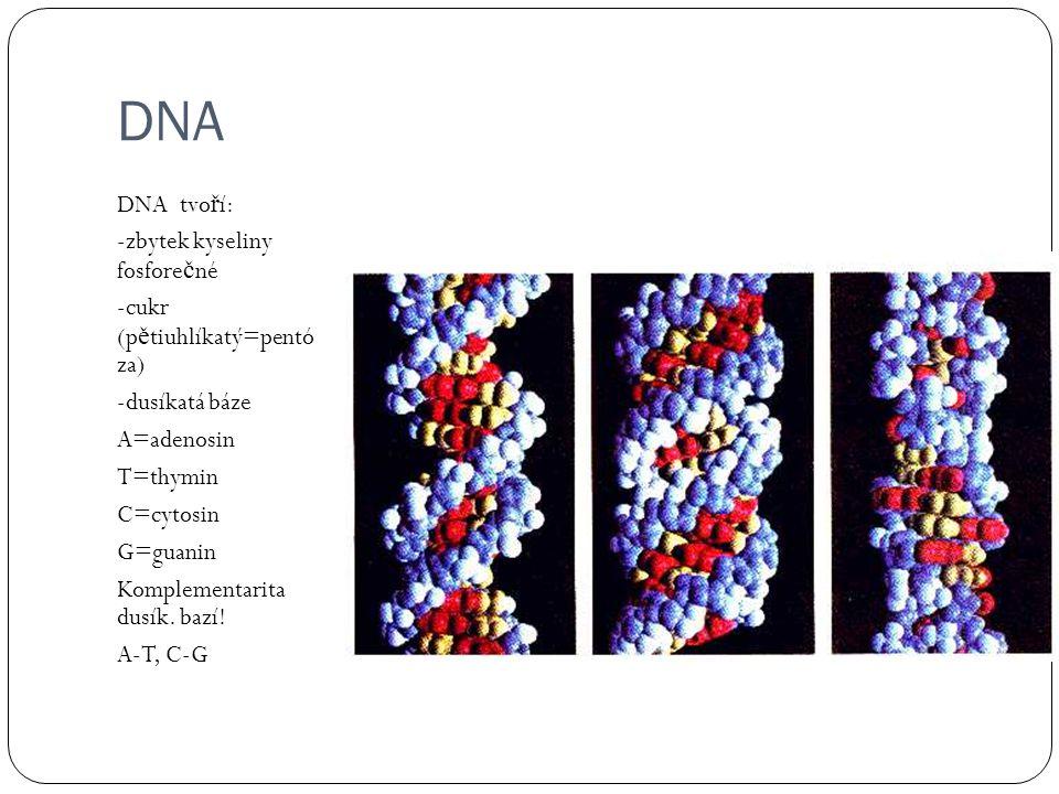 DNA DNA tvoří: -zbytek kyseliny fosforečné