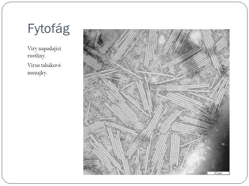 Fytofág Viry napadající rostliny. Virus tabákové mozajky.