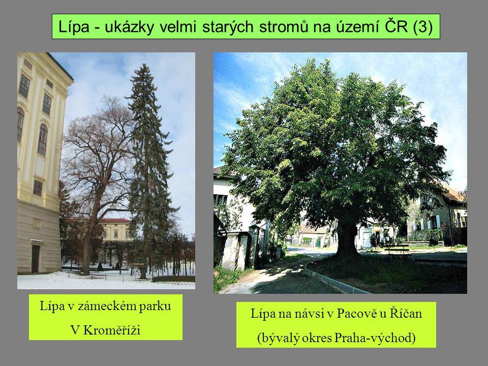 Lípa - ukázky velmi starých stromů na území ČR (3)