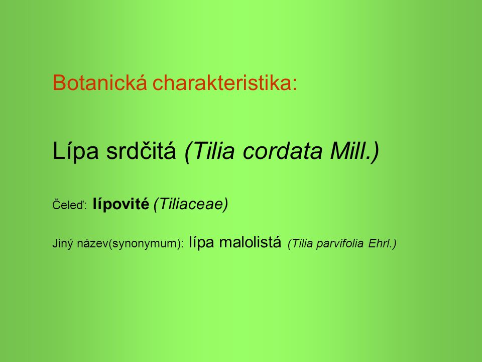 Lípa srdčitá (Tilia cordata Mill.)