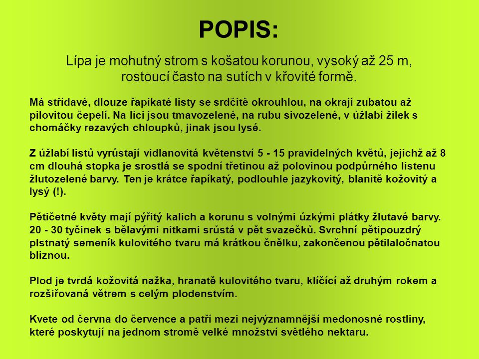 POPIS: Lípa je mohutný strom s košatou korunou, vysoký až 25 m,