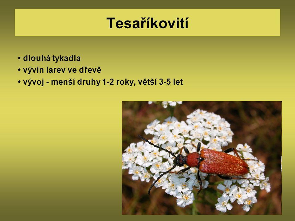 Tesaříkovití • dlouhá tykadla • vývin larev ve dřevě