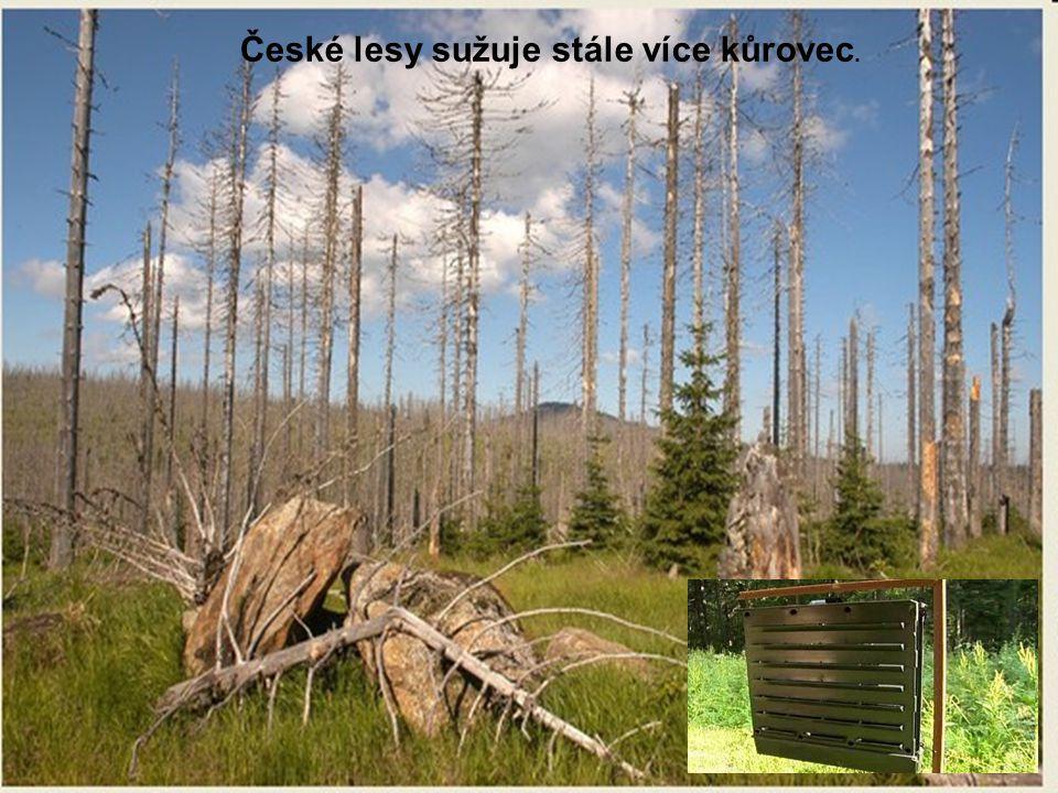 České lesy sužuje stále více kůrovec.