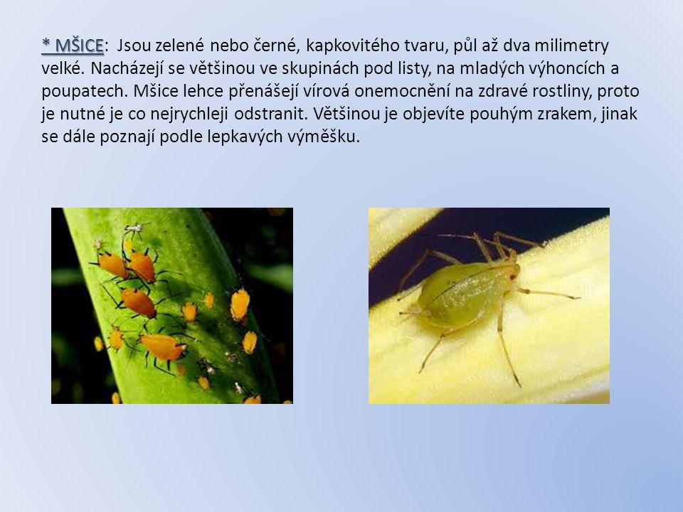 * MŠICE: Jsou zelené nebo černé, kapkovitého tvaru, půl až dva milimetry velké.