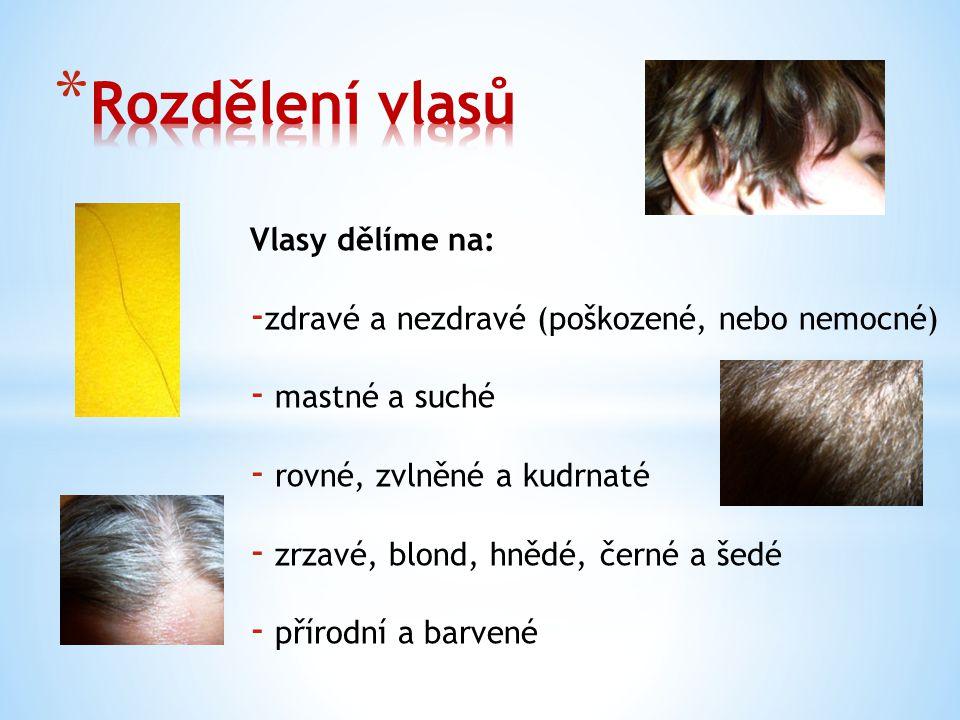 Rozdělení vlasů Vlasy dělíme na: