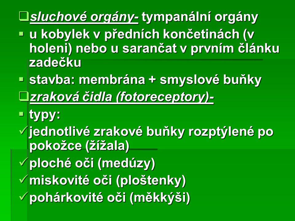 sluchové orgány- tympanální orgány