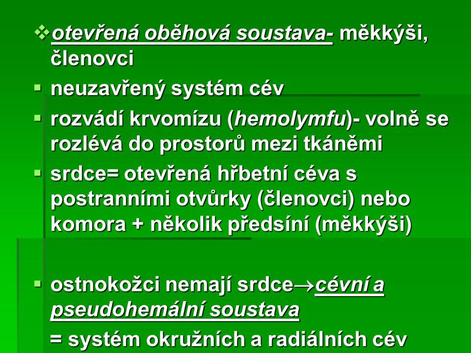 otevřená oběhová soustava- měkkýši, členovci