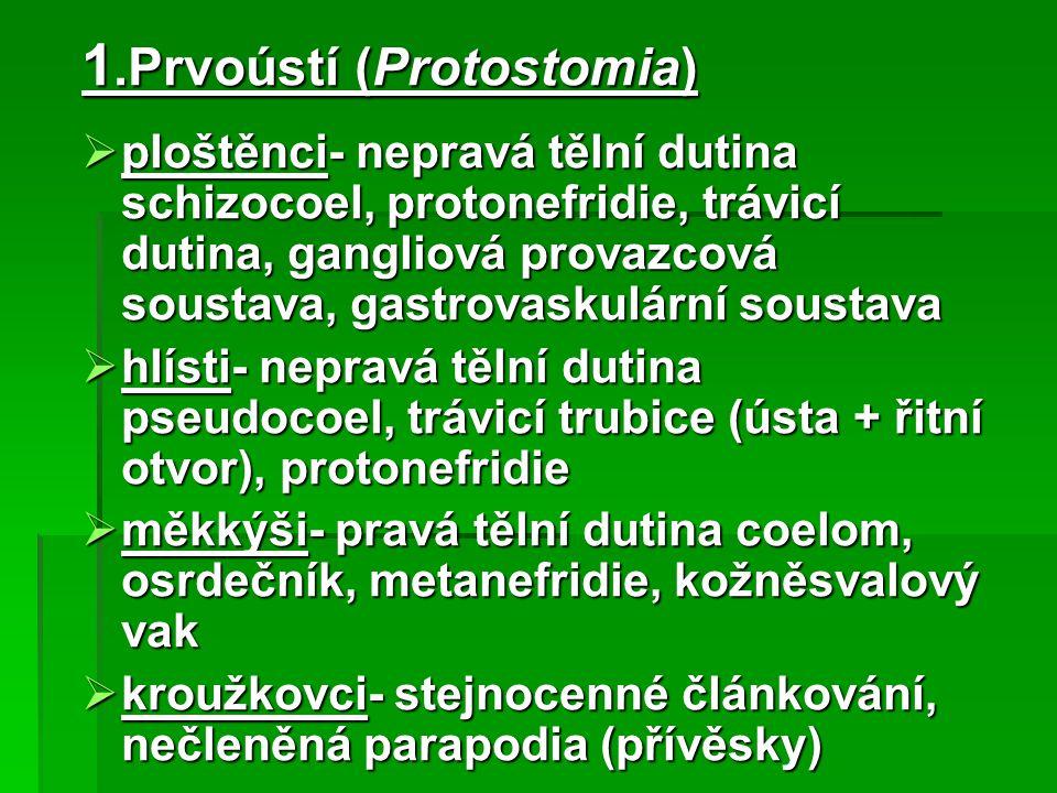 1.Prvoústí (Protostomia)