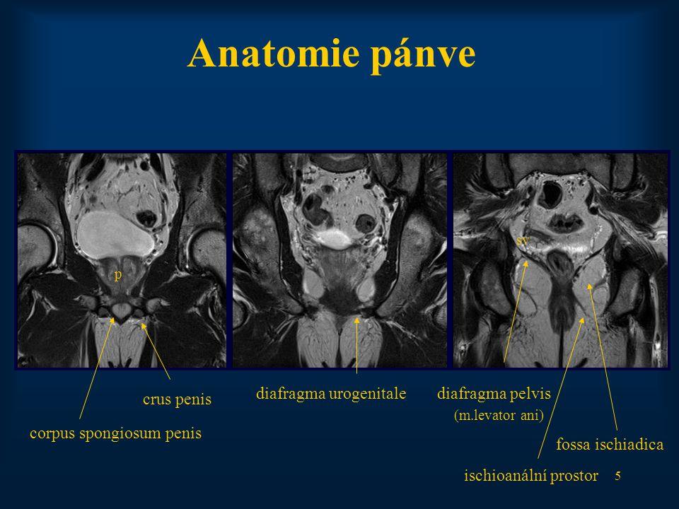 Anatomie pánve diafragma urogenitale diafragma pelvis crus penis