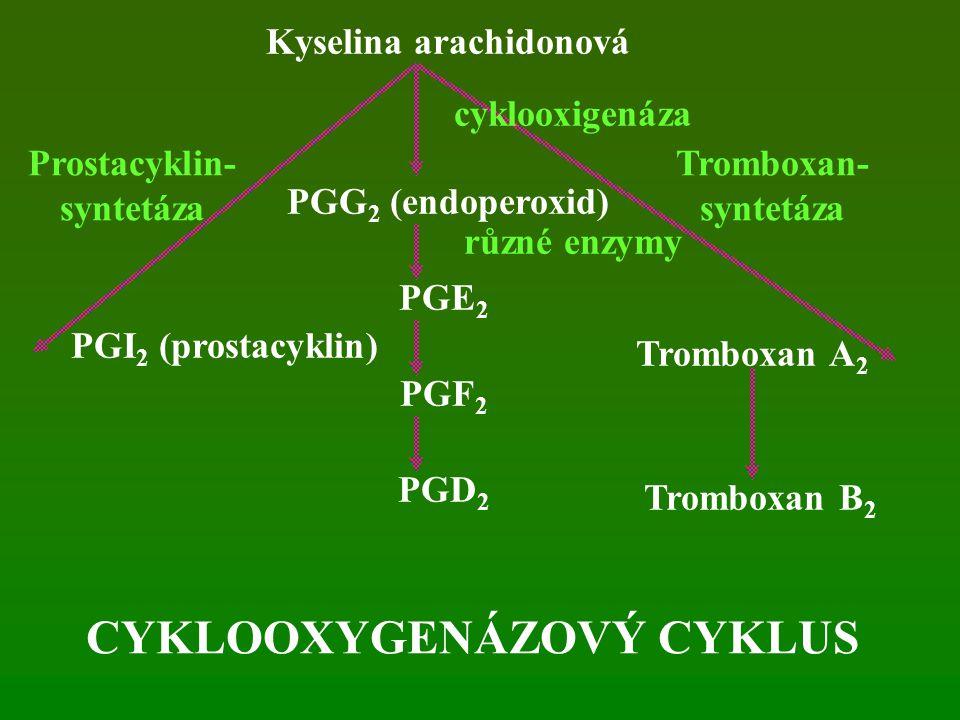 Kyselina arachidonová CYKLOOXYGENÁZOVÝ CYKLUS