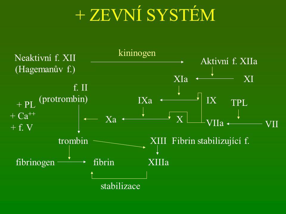 + ZEVNÍ SYSTÉM kininogen Aktivní f. XIIa Neaktivní f. XII