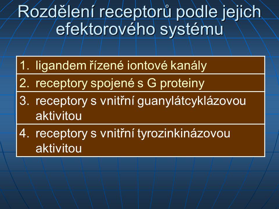 Rozdělení receptorů podle jejich efektorového systému