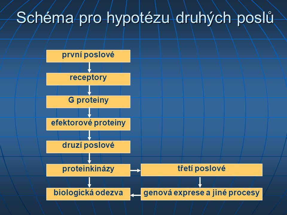 Schéma pro hypotézu druhých poslů