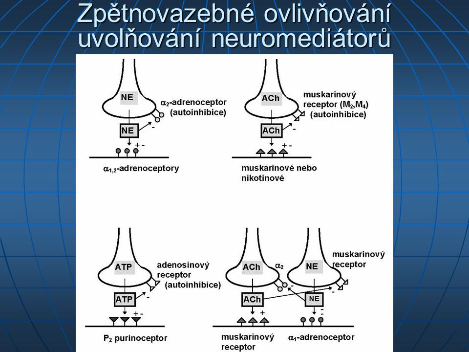 Zpětnovazebné ovlivňování uvolňování neuromediátorů