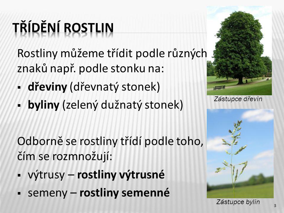 Třídění rostlin Rostliny můžeme třídit podle různých znaků např. podle stonku na: dřeviny (dřevnatý stonek)