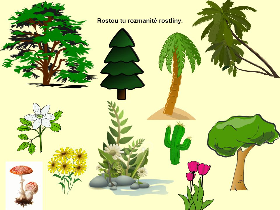 Rostou tu rozmanité rostliny.