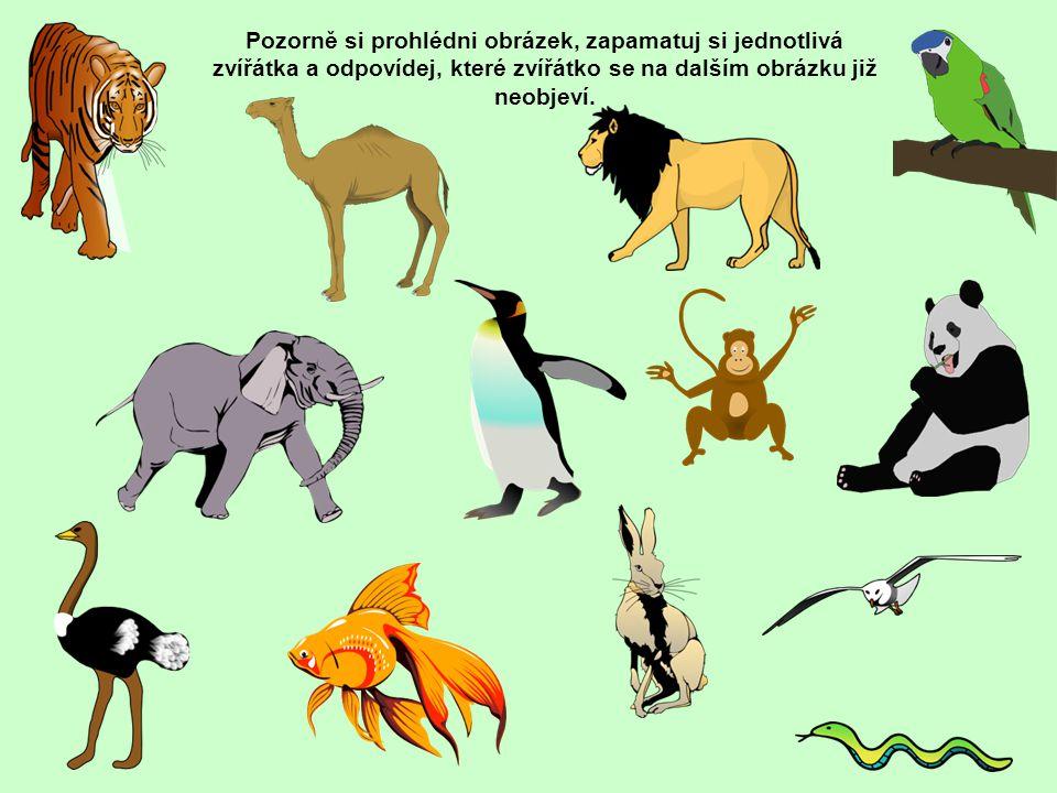 Pozorně si prohlédni obrázek, zapamatuj si jednotlivá zvířátka a odpovídej, které zvířátko se na dalším obrázku již neobjeví.